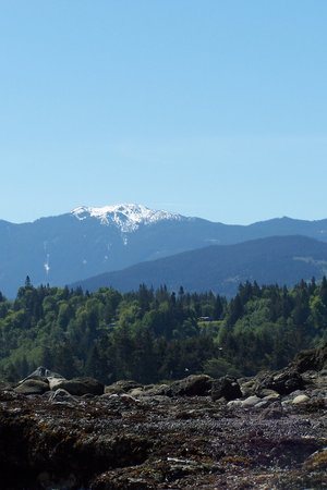 Port Angeles, WA: View toward the mountains from Salt Creek