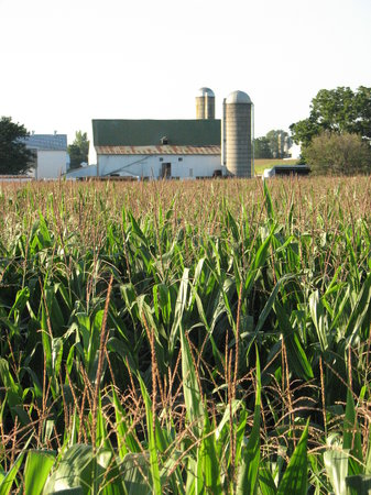 Lancaster, Pennsylvanie : Corn fields surround you