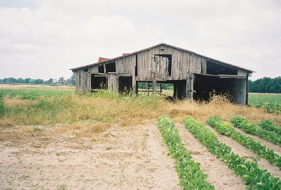 Mississippi Delta: Old Barn along Hgy 61