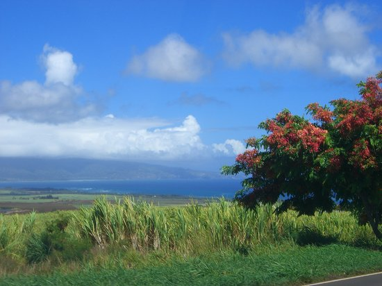 Makawao, HI: Blick vor dem Haus