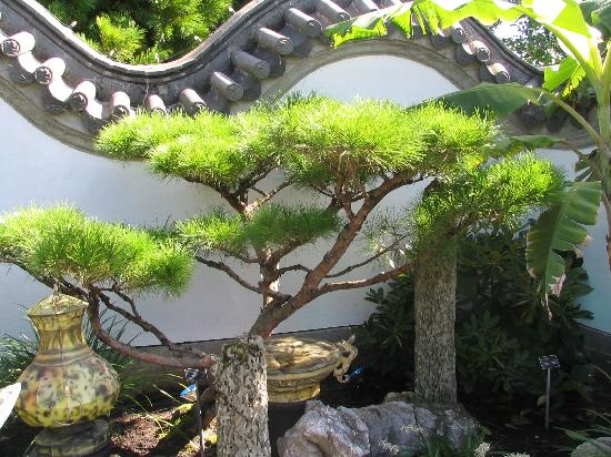 Chinese-garden-style-with-original-Chinese-wall-and-trees