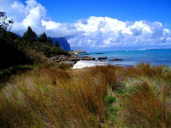 Lord Howe Island, : in den Dnen