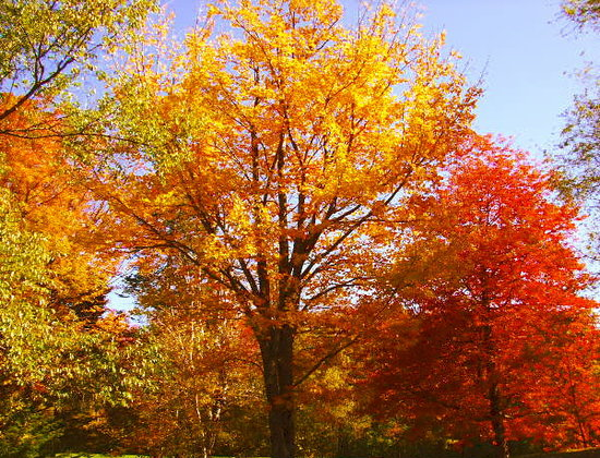 Fall Foliage West Dover, VT