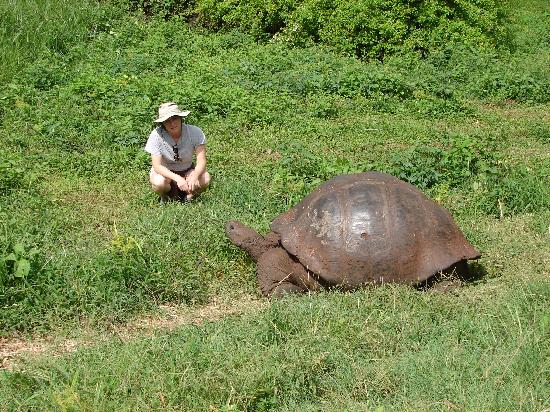 Semilla Verde Lodge & Spa: Encountering giant tortoises in the highlands