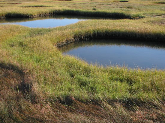 Wellfleet, : Marsh on a perfect day.