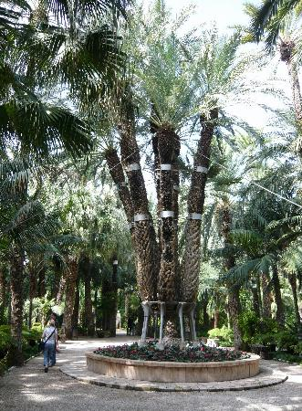 Huerto del Cura - The imperial palm - Picture of Palm Groves (Palmeral) of El...