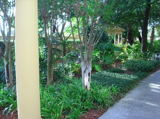 La Quinta Inn & Suites USF (Near Busch Gardens): Garden and Gazebo