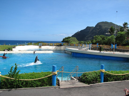 Waimanalo, Hawa: More Dolphin Show
