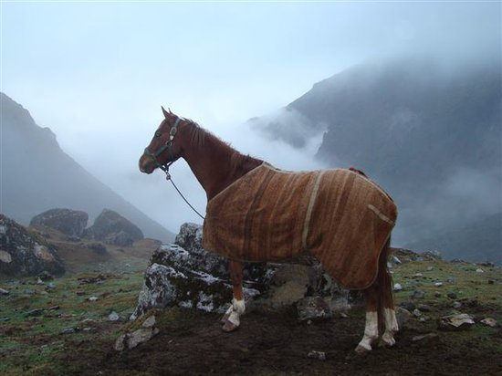 Machu Picchu, Peru: Even the horses can't belive the view!