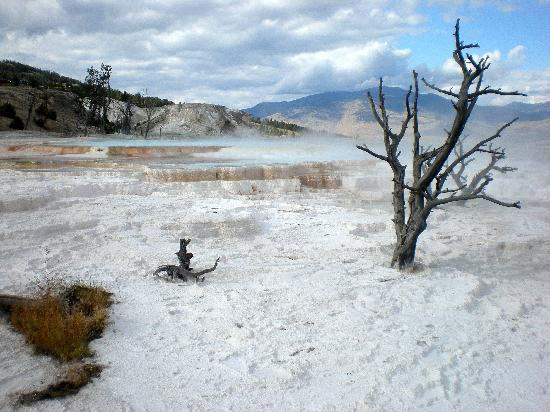 Wyoming: Mammoth Terraces at Yellowstone NP