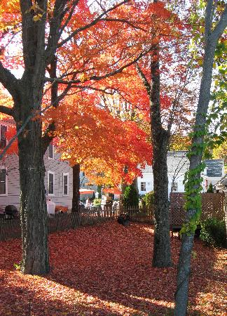 Maine: Fall color - York
