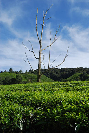 Cameron Highlands, ماليزيا: Scenic view at Cameron Highlands