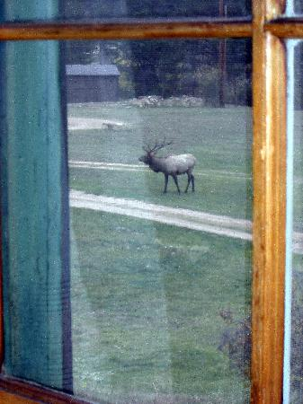 Trout Haven Ranch Lodge: elk viewing from the window