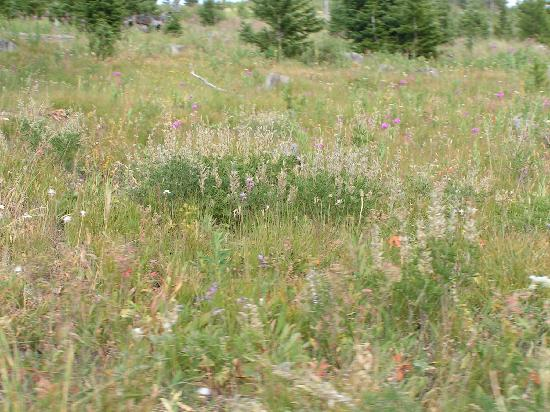 Crevice Mountain Lodge: Wild flowers even in August