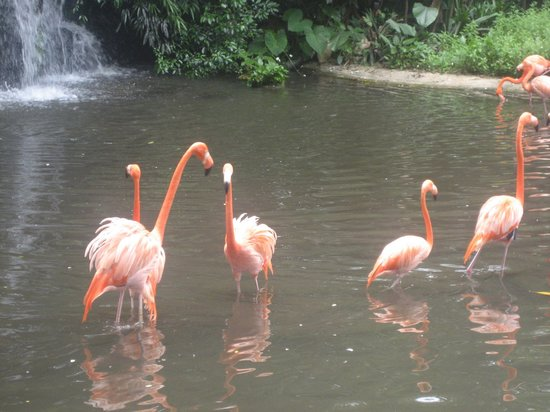 Jurong Bird Park