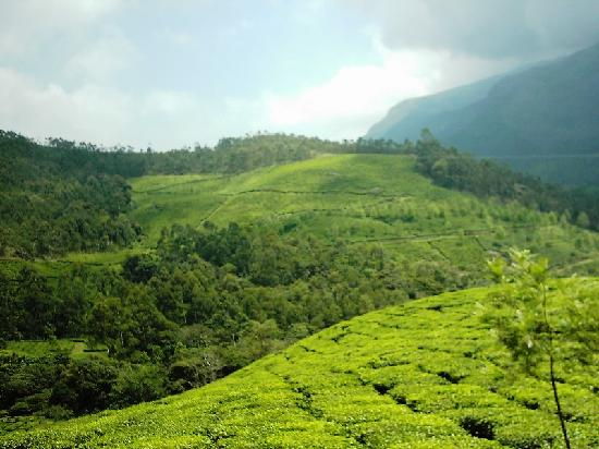 Westwood Riverside Garden Resorts: Lush green Munnar