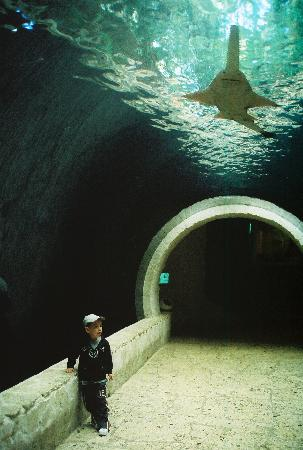 Tunnel With Sawfish Above Picture Of Dallas World
