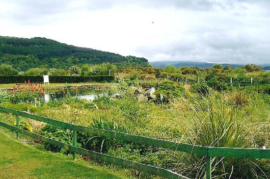 Tralee Bay Holiday Park: The conservation pond