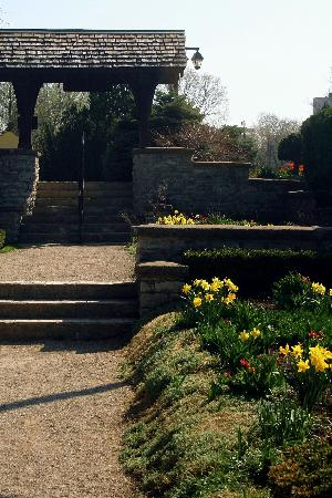 Stratford, Canada: Daffodils in the Shakespearean Garden