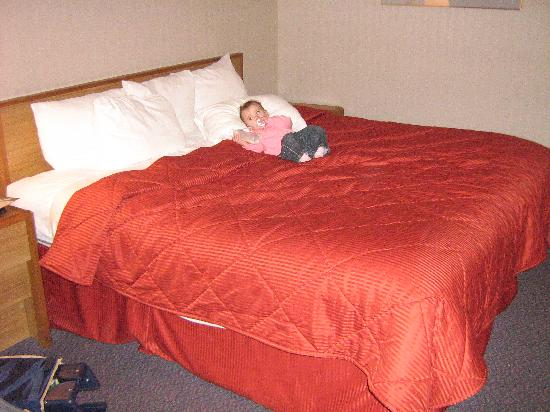 Comfort Inn Cleveland Airport: king sized bed