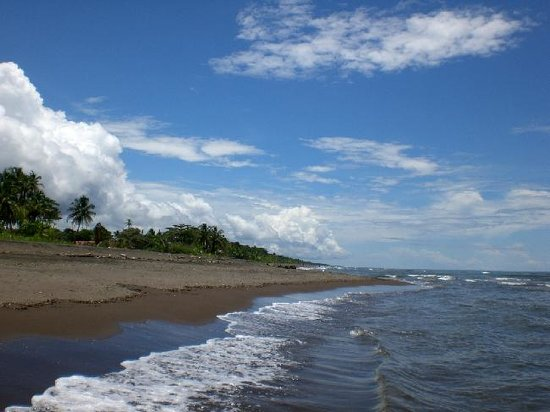Playa de tortuguero