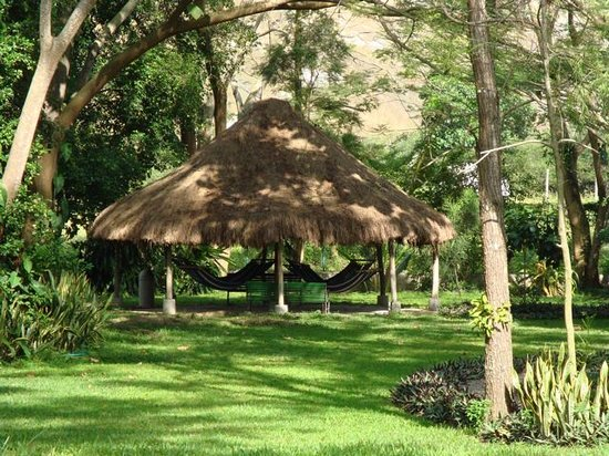 San Pedro Sula, Honduras : Hammocks in the garden