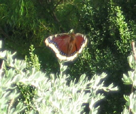 Butterflies Are Everywhere Picture Of San Diego Botanic