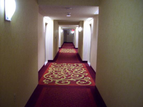 Detroit Metro Airport Marriott: Hallway