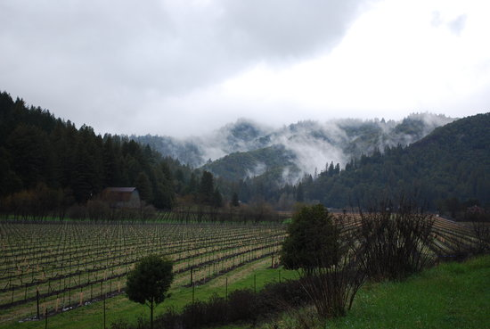 Guerneville, Калифорния: The view from behind the check-in building.
