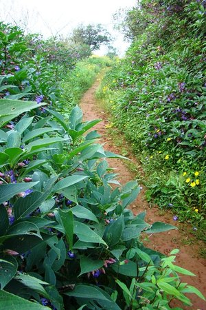 Matheran, India: Wildflower bedecked trail