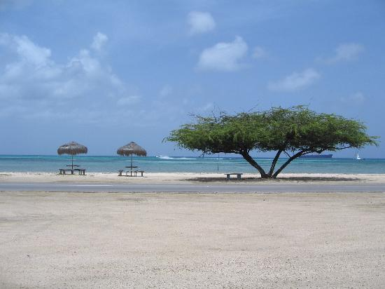 Malmok Beach, Aruba: Across the street from our room