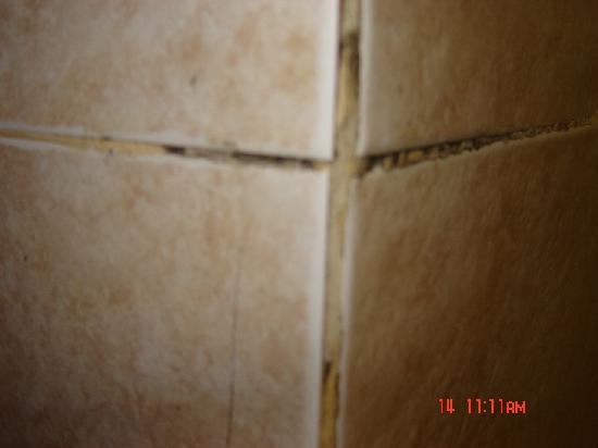 black mold that was all through wall tile grout picture of barcelo punta cana punta cana. Black Bedroom Furniture Sets. Home Design Ideas