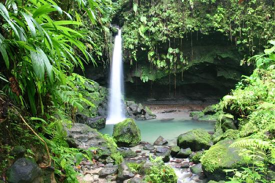 Emerald pool nature trail morne trois pitons national park dominica