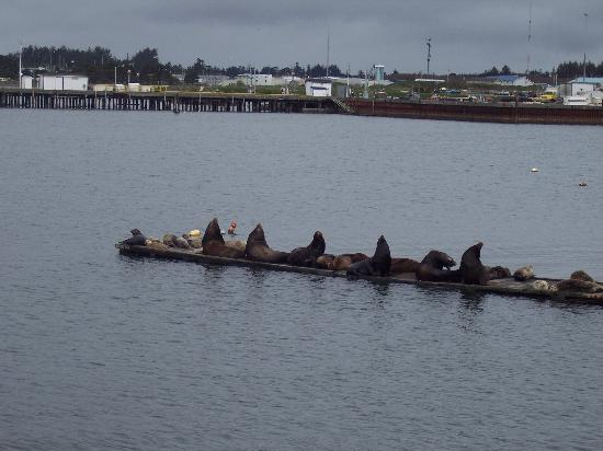 Super 8 Crescent City : California sea lions ,crescent city
