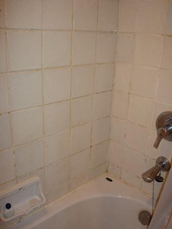 Mold tile photos pictures images - Bathroom wall mold removal ...