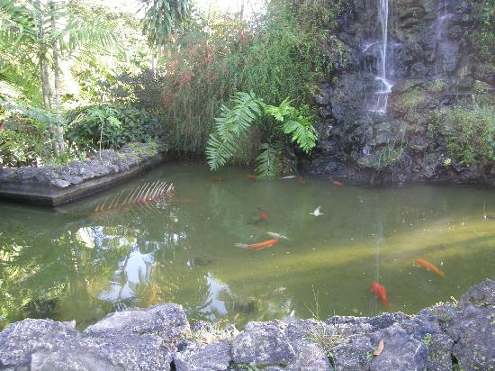 Waterfall Koi Pond At Entrance To Pigeon Point Beach Picture Of Pigeon Point Beach Tobago