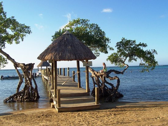 Tranquilseas Eco Lodge and Dive Center: The mangroves by the dock