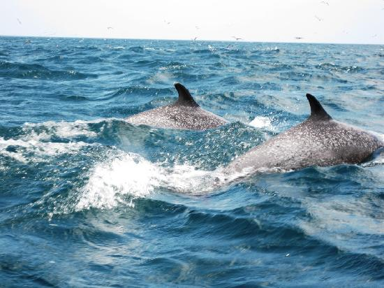 Сан-Хуа -дель-Сур, Никарагуа: Dolphins off the coast of San Juan del Sur