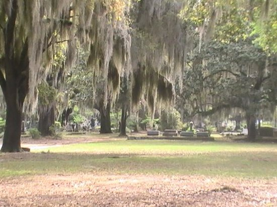 Spanish Moss Bed and Breakfast: a good day