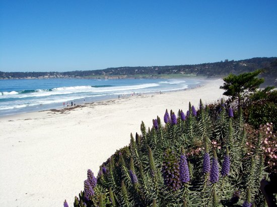 San Antonio House Inn: Carmel Beach from Scenic Road