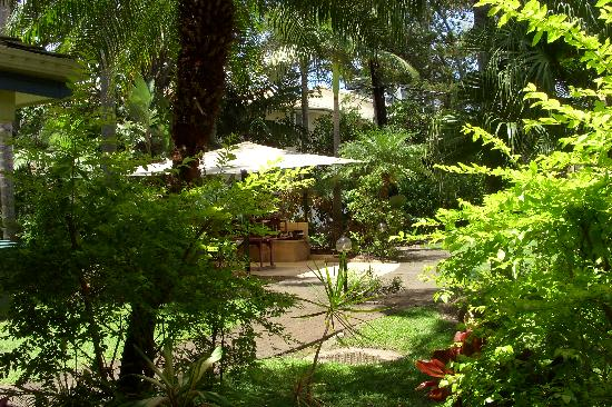 Tropical View From Our Ground Floor Unit Picture Of Paradise Grove Burleigh Heads Tripadvisor