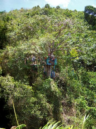 3 Martini Beach Bar Restaurant and Apartments: Rain forest zip line
