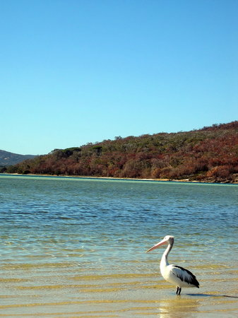 Day 4 - Albany Emu Point - they are everywhere