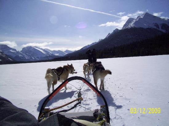 Rundle Manor Apartment Hotel: Dog Sledding