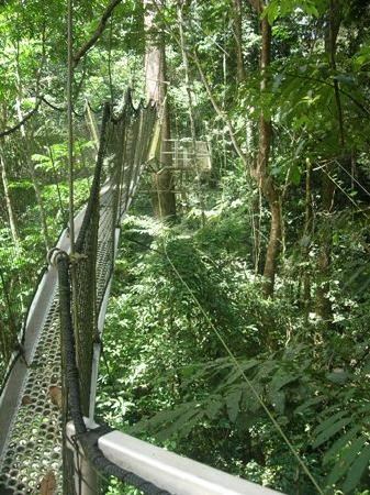 Obudu, Νιγηρία: The canopy walk - not for the fainthearted!