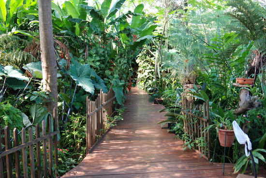 Secret Garden Iguazu B&B: Our view
