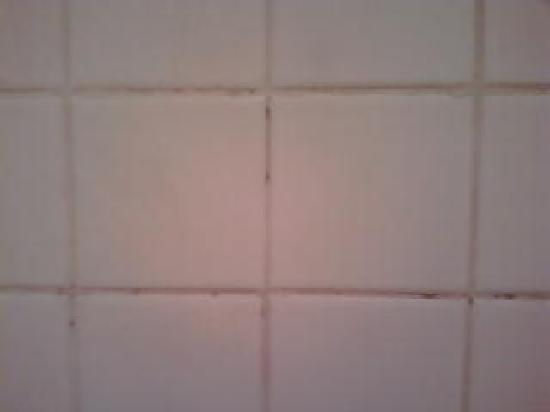 Red Mould In Bathroom Chevroletsoccercom - Red mold in bathroom