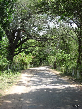 Vellore, India: Inside the reserve forest