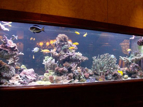 beautiful fish tank picture of hotel estherea amsterdam