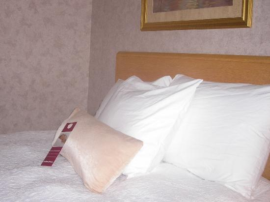 Hampton Inn Syracuse North (Airport Area): Very Comfy Bed